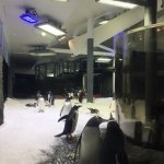 Penguin Aquarium Lighting