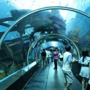 Sentosa Aquarium, Singapore 1
