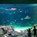 Sydney SEA LIFE Aquarium, Shark Tank