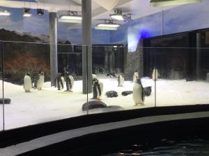 Penguin Aquarium Lighting