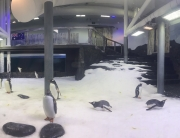 Sydney Aquarium - Penguin Exhibit Lighting