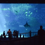 Sentosa Aquarium LED Luminaires