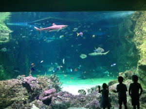 Sydney SEA LIFE Aquarium, Shark Tank Aquarium LED Lighting