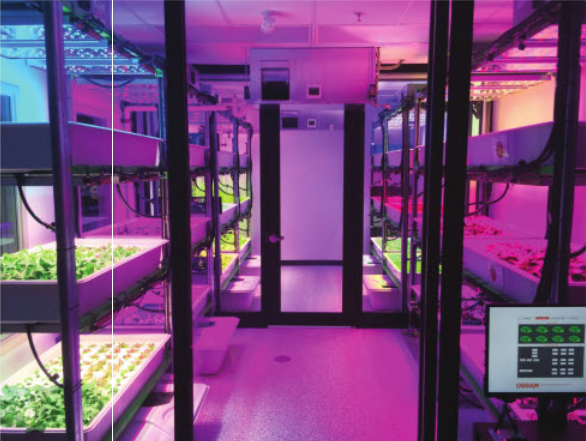 Horticultural LED Advances